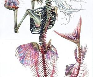 mermaid, skeleton, and skull image