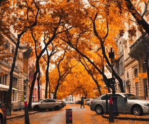 autumn, orange, and car image