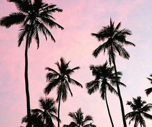 pink, summer, and tumblr image