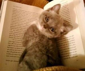 kitty image
