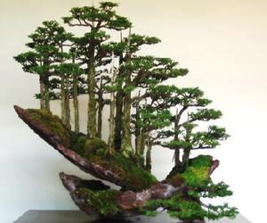 bonsai and bosque image
