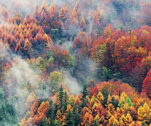 autumn, tree, and forest image