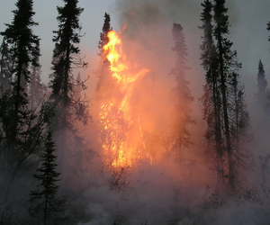 fire, forest, and grunge image