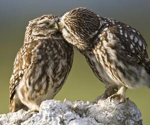 owl, animal, and kiss image