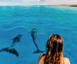 dolphin, nature, and animal image