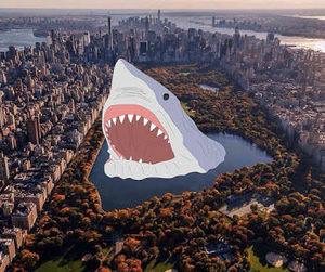 art and shark image