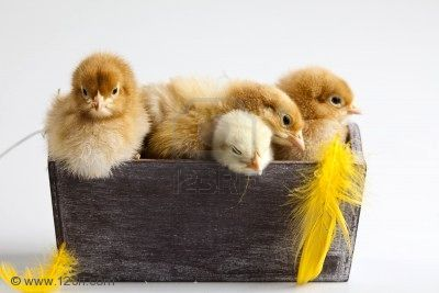 happy-easter-baby-cute-animal_large.jpg