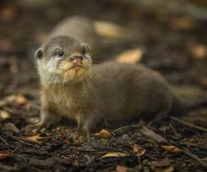 baby animals, cute animals, and otter image