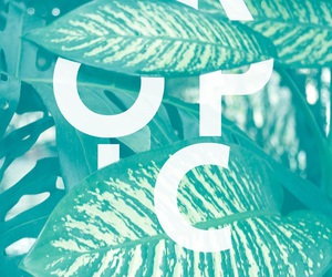 wallpaper, tropical, and background image