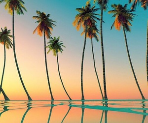 beach, palms, and plants image