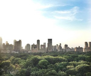 love, Central Park, and city image