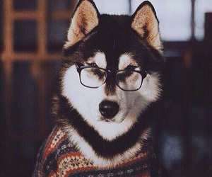 dog, animal, and glasses image