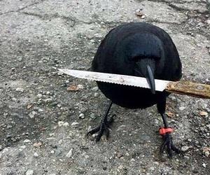 knife and meme image