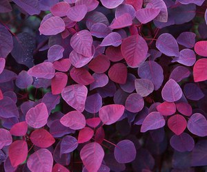 purple, nature, and leaves image
