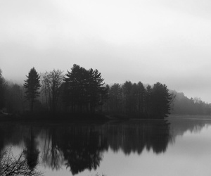 forest, lake, and dark image