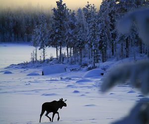 animals, nature, and snow image