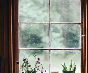 flowers, rain, and plants image