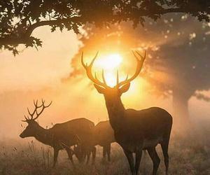 animals, fall, and fog image
