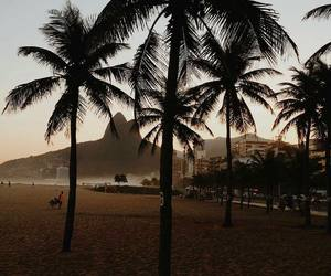 beach and palms image