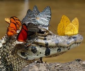 alligator, animals, and swamp image