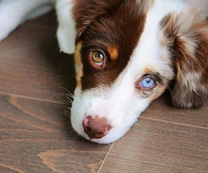 dog, cute, and blue image