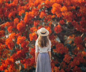 flowers, autumn, and photography image