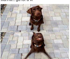 dog, funny, and walk image