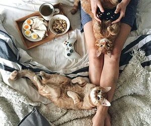 cat, breakfast, and animal image