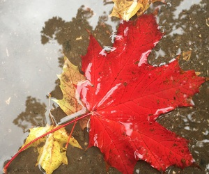 autumn, maple leaves, and nature image