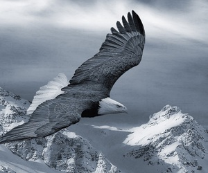 beauty, Best, and bird image
