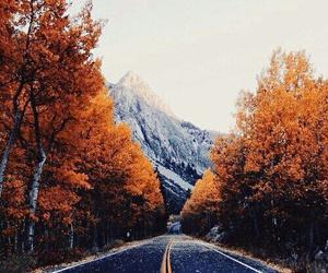 arboles, carretera, and paisaje image