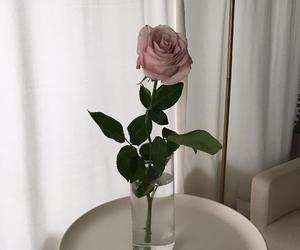 aesthetic, roses, and white image