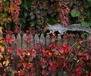autumn, nature, and animal image
