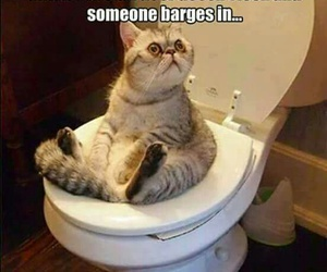 bathroom, cat, and funny image