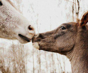 horse, animal, and love image