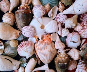 beach, colored, and shells image