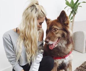 dog, blonde, and animal image