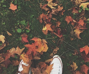 fall, converse, and autumn image
