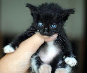 cats, kitten, and cute kitten image