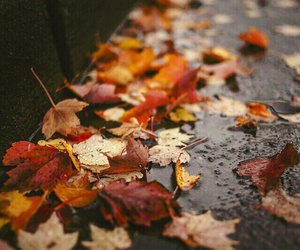 autumn, leaves, and color image