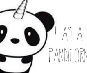 unicorn, panda, and pandicorn image