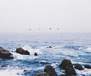 sea, ocean, and birds image