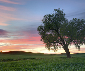 solitude, sunset, and tree image