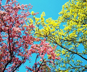 colorful, nature, and pretty image