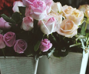 flowers, roses, and by_me image