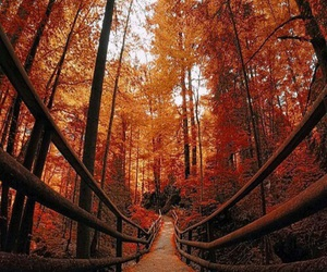 autumn, forest, and leaves image