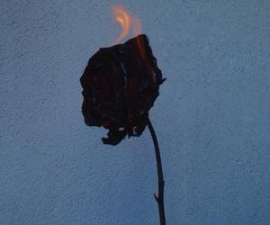 aesthetic, beautiful, and black image