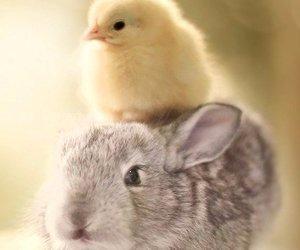animal, rabbit, and Chick image