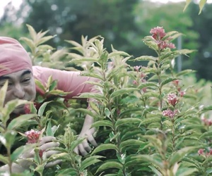 flowers, pink guy, and filthy frank image