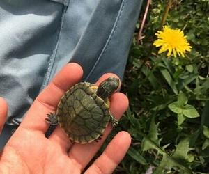turtle, animal, and green image